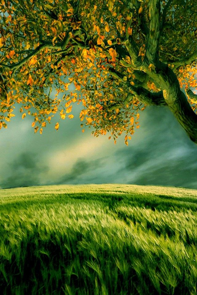 Pin By Akhter Sultana On Nature Landscape Wallpaper New Nature Wallpaper Beautiful Landscape Wallpaper