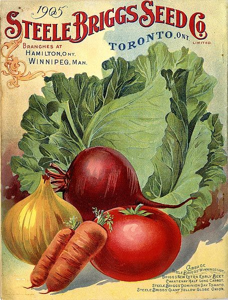 The Steele Briggs Seed Co. Limited  Catalogue: season 1905  Catalogue
