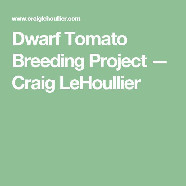 Dwarf Tomato Breeding Project — Craig LeHoullier