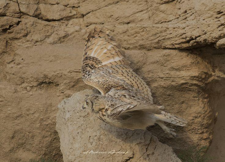 Camouflage  -   Pharaoh eagle owl
