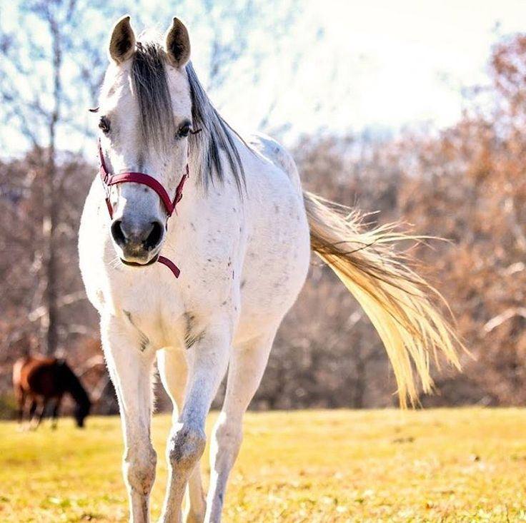 ** PLEASE TAKE DOWN IF NOT ALLOWED***** ............ hey guys! so if you are interested in a horse that can do ANYTHING for a price of a mere $500( Price can go up at anytime) then please look at Lisbon! Lisbon is 7 years old and 14.3 hands high! She loves people!! If you are looking for a heart horse then follow the link to adopt a horse of a lifetime http://www.defhr.org/horse/lisbon/