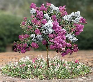 Learn how to graft fruit trees so that you can have multiple varieties on the same tree! Description from pinterest.com. I searched for this on bing.com/images