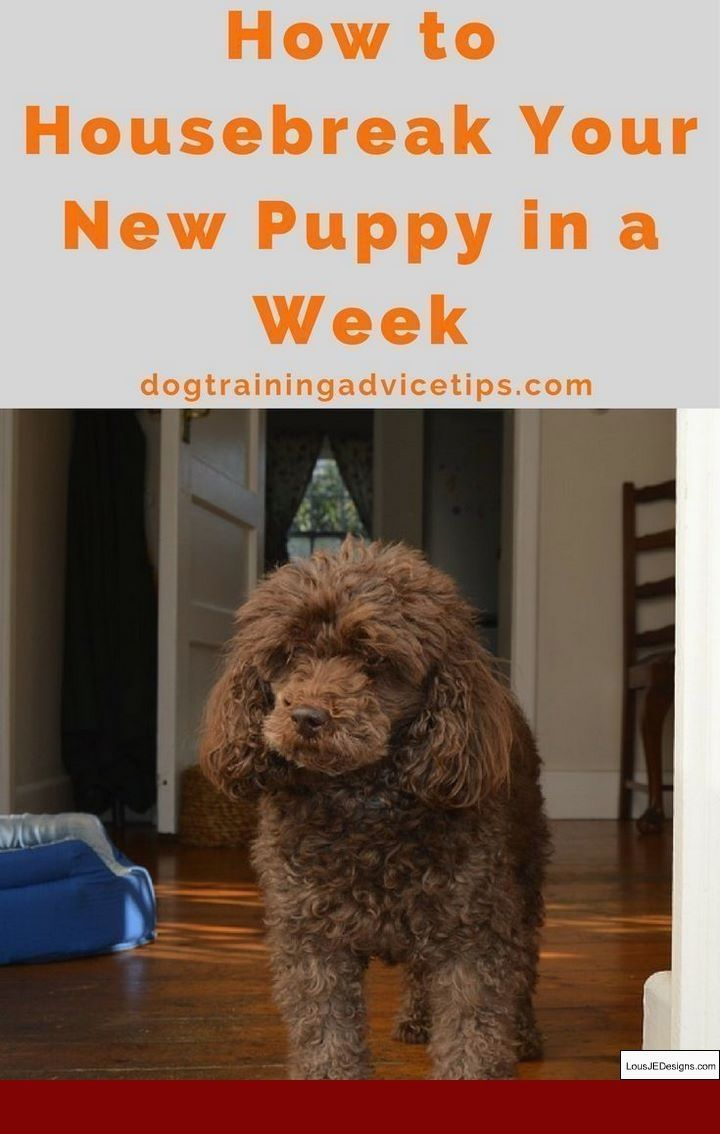 How To Train Your Dog To Go Potty In One Spot And Pics Of Tips For