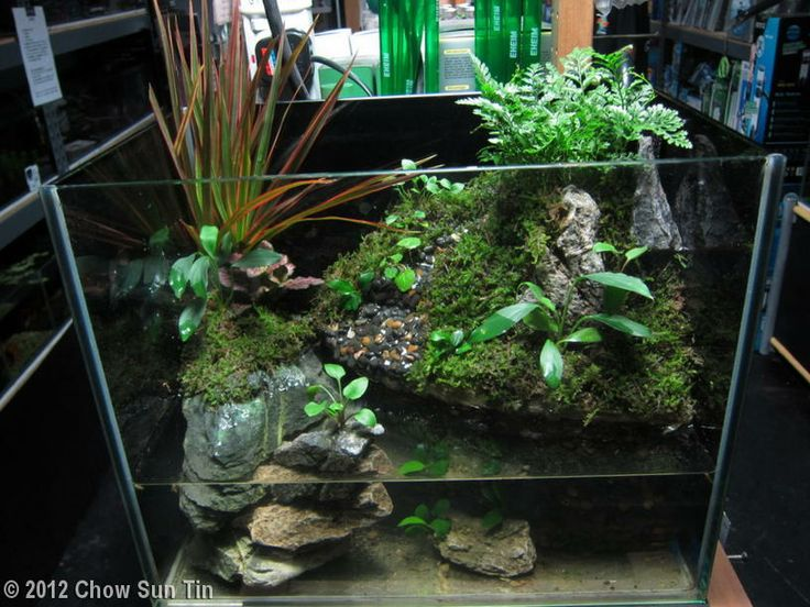 2012 aga aquascaping contest entry 293 nano paludarium for Garden aquarium design