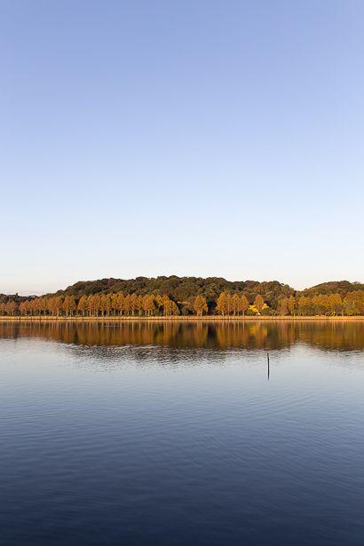 紅葉したメタセコイアが、 風の止んだ湖面に映るこの風景から始まった佐鳴湖百景。  最低でも10年間...