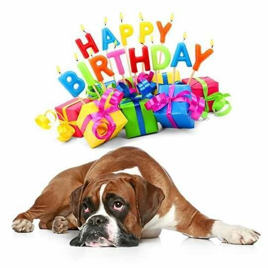 anniversaire chien boxer
