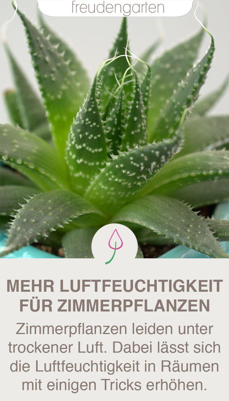 Luftfeuchtigkeit für Zimmerpfllanzen erhöhen | Garten ...