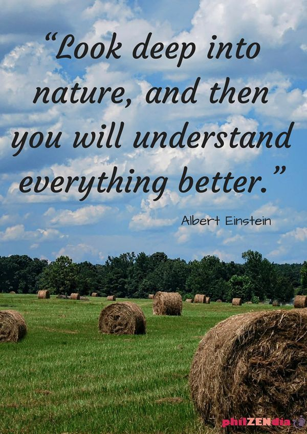 Earth Day Quotes 82 Best Earth Day Quotes Images On Pinterest  Earth Day Quotes