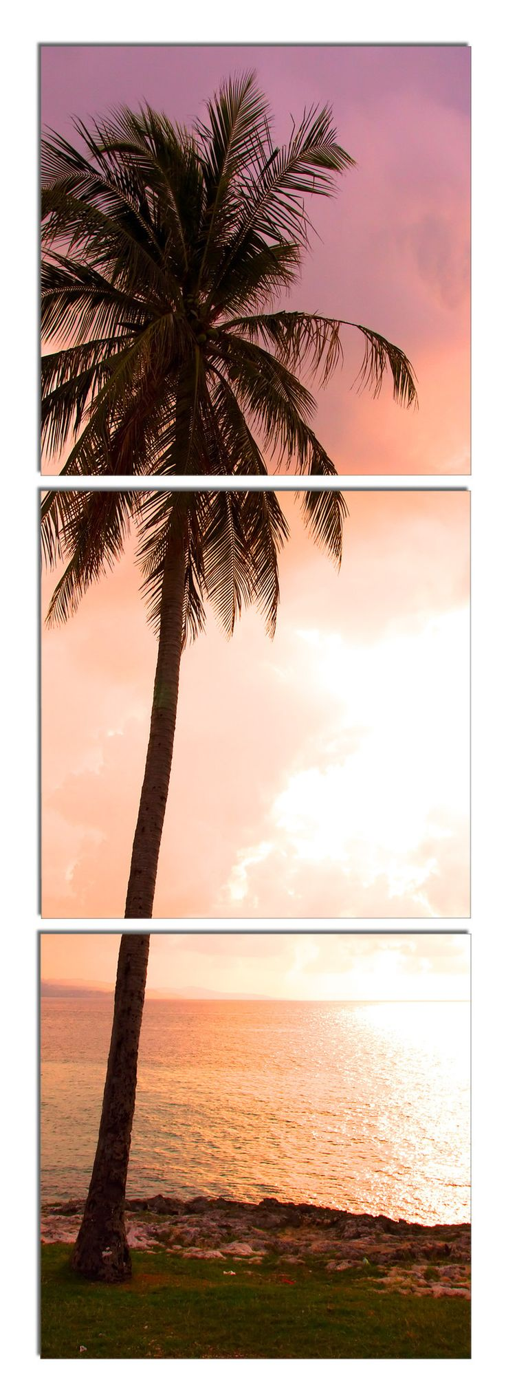 17 Best images about Triptychs on Pinterest | Cove, Ocean sunset ... - Palm Sunshine Vinyl Wall Art - Set of 3 by Elementem Photography on
