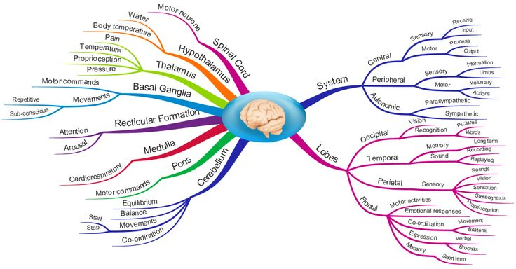 Nervous System - Occupational Therapy Student Info