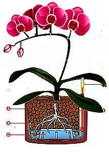 how to grow orchids hydroponically