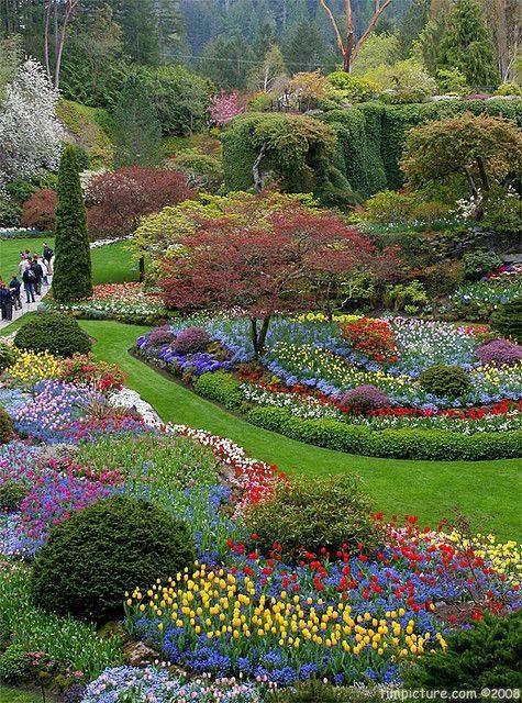Flores de variados colores
