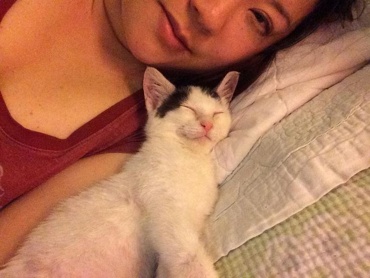 Best Week Old Kitten Ideas On Pinterest Kittens Cutest - Kitten born with permanently worried looking eyebrows will melt your heart