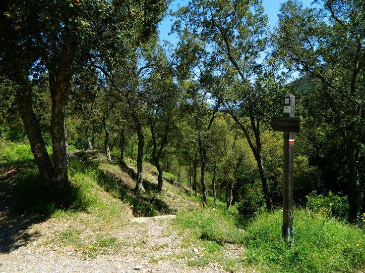 Col de Colle Rousse. <p>Départ du sentier de descente dans les gorges.</p>