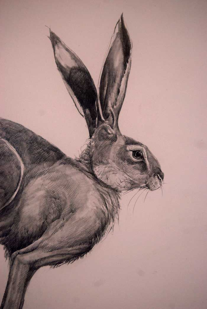 Line Drawing Bunny : Detail of mooneyed hare drawing easter ecstasy