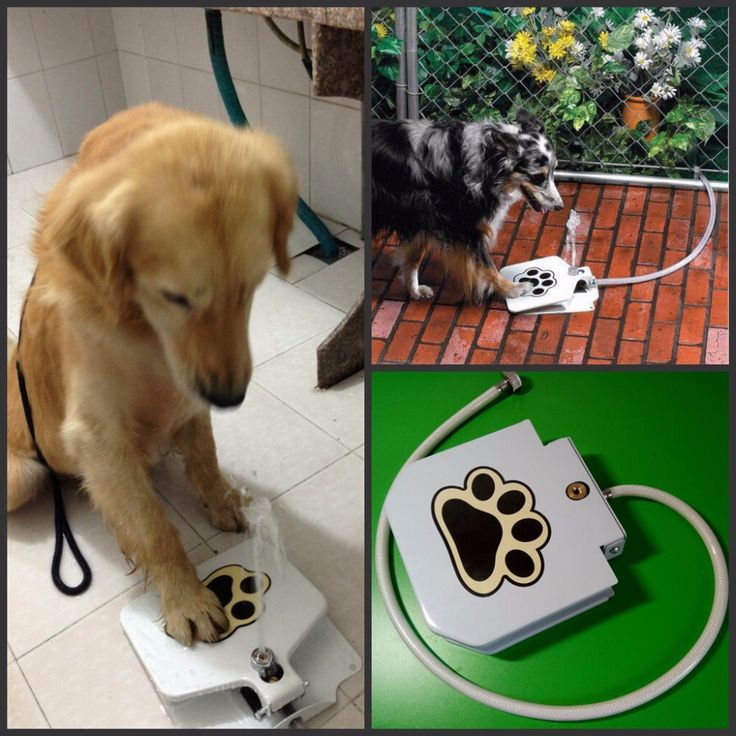 2016 New Dog Supplies Upgrade Pet Step Spray Doggie Dog Cat Paw Water Fountain Feeder Drinking Spring Pedal Pet Water Feeder // FREE Shipping //     Get it here ---> https://thepetscastle.com/2016-new-dog-supplies-upgrade-pet-step-spray-doggie-dog-cat-paw-water-fountain-feeder-drinking-spring-pedal-pet-water-feeder/    #nature #adorable #dogs #puppy #dogoftheday #ilovemydog #love #kitty #kitten #doglover #catlover