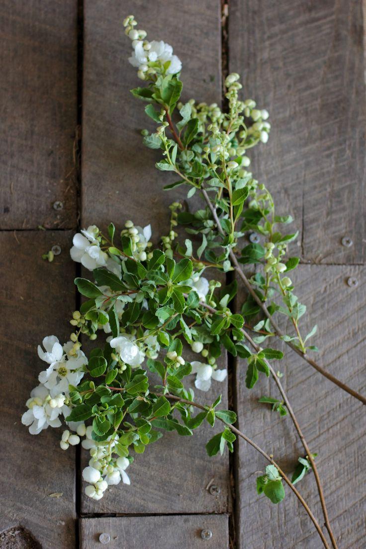 Exchorda 'The Bride' grown by Love 'n Fresh Flowers. Beautiful spring white flowering shrub.