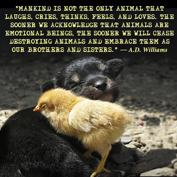 Animal Abuse Quotes By Famous People: 1000+ Animal Cruelty Quotes On Pinterest