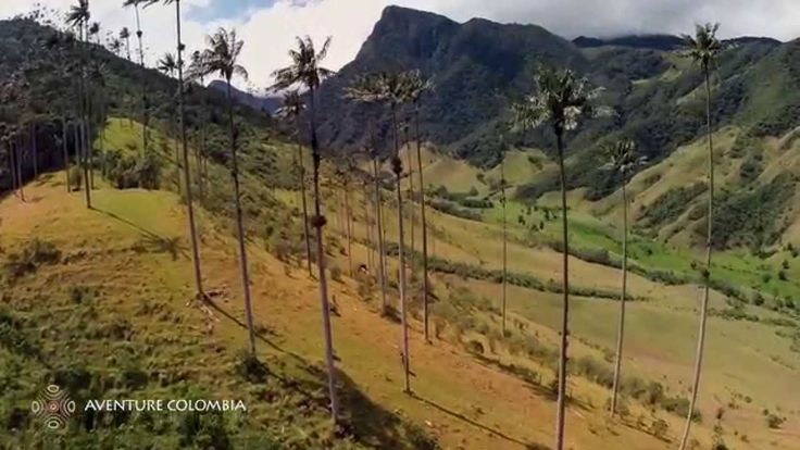 Valle COCORA palmas de cera Eje Cafetero desde el Aire (Drone from above vue du ciel) Aventure Colombia More information on our packages at : http://ift.tt/1iqhKT8 #Colombia #coffee