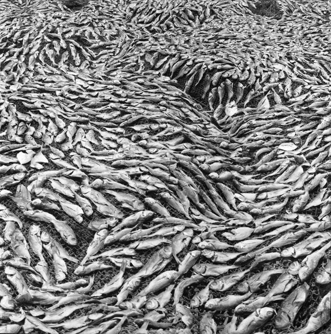 Jo Ractliffe. DRYING FISH ON THE BEACH IN ILHA 2007. Silver gelatin handprint, 45 x 45 cm.