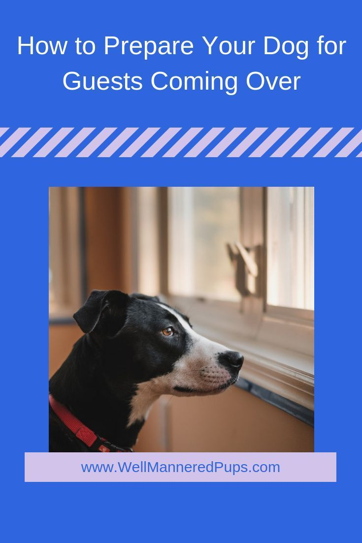 How To Prepare Your Dog For Guests Coming Over Dog Training Dog