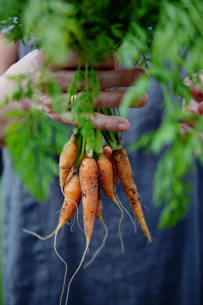 A farm tour and a recipe for yellow lentil cakes with poached eggs :: Cannelle et Vanille