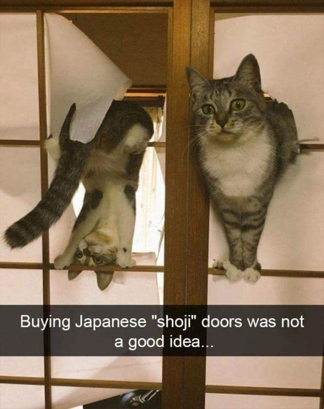 Buying Japanese doors when you own cats... not a good idea.