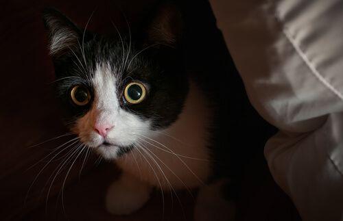 Paura, ansia, fobia: se notate che il vostro gatto è abbacchiato, si nasconde o ha dei comportamenti strani, come ad esempio graffiarsi e mordersi da solo, probabilmente sta attraversando un momento problematico dovuto ad alcuni di questi fattori.