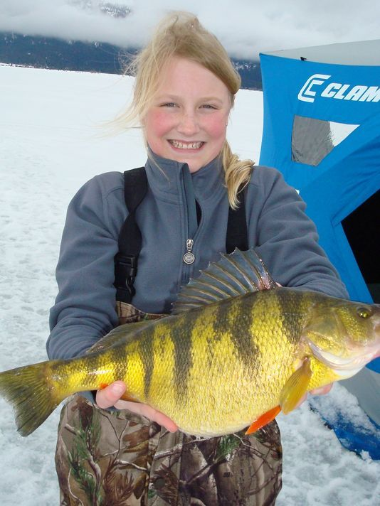 Eagle girl catches world record yellow perch fish catch for Ice fishing tips