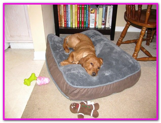 Dog Wetting Bed At Night | Dogs
