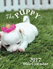 100's of great dog names. The best dog names for females and males. Whatever your color, size or type of dog. Everything you need to make the right choice.