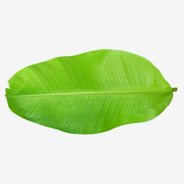 Green Banana Leaves Leaf Clipart Banana Tropical Png Transparent Clipart Image And Psd File For Free Download Banana Leaves Image Palm Background Banana Leaf