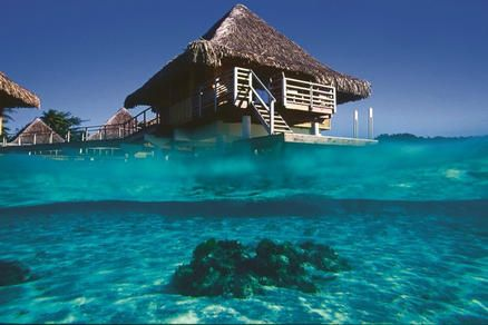 """You can't get much closer to the water than on Over-water Bungalow! The InterContinental Bora Bora Resort Le Moana gives new meaning to """"sleeping with the fishies""""  Nikki Miller~Romance Travel Specialist NikkiM@cruisingco.com #sleepingwiththefishies #boraborahoneymoon #RockMyHoneymoon #Romantichoneymoon"""