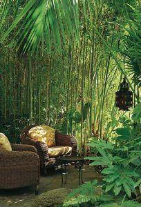 Bambu ve areka ve palmiye gibi bitkiler bahçelerinizde serin gölge alanlar yaratmak için harika bir fikir!