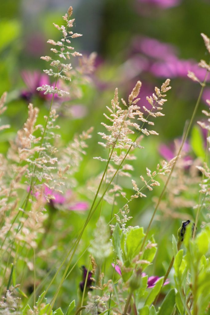 ✽ wildflowers and grasses