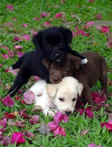 Three puppies. Photo was previously uploaded to the Internet by Timeline Photos. - Pixdaus