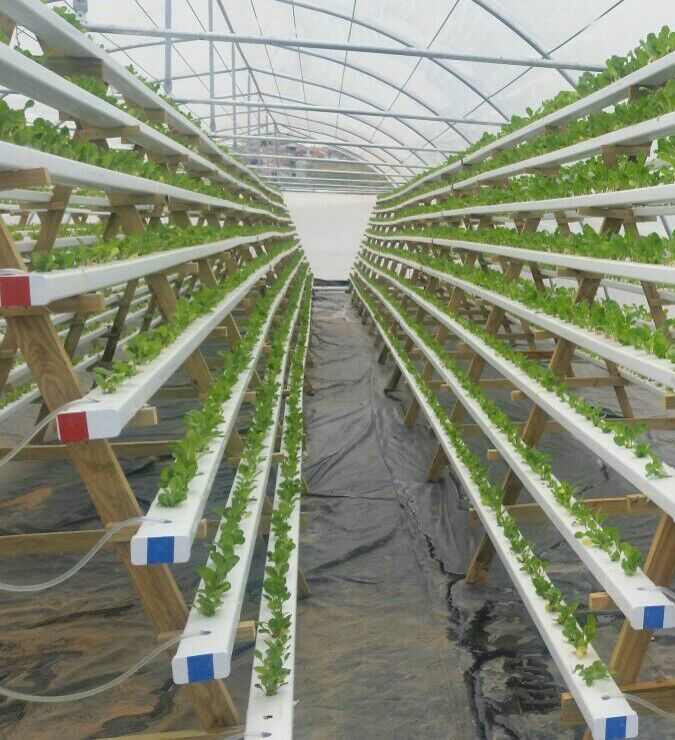 25 best ideas about nft hydroponics on pinterest diy for Hydro gardens