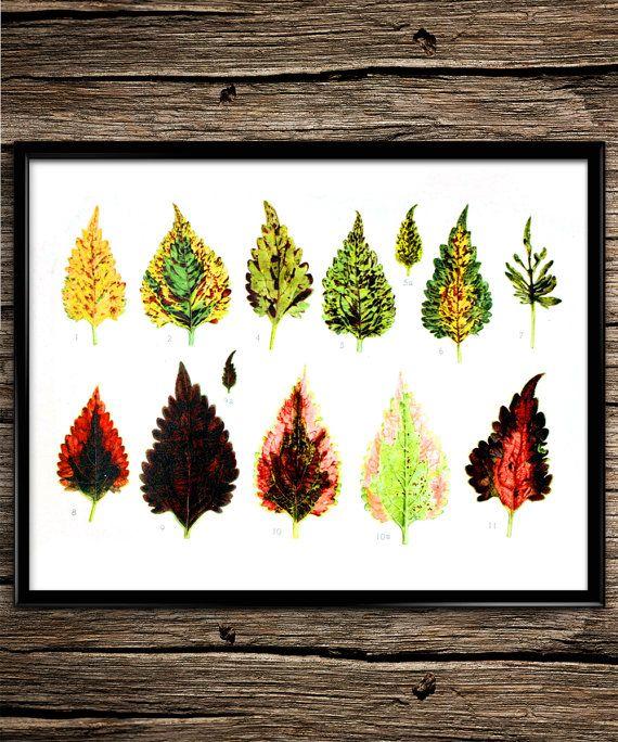 Leaf Evolution | Vintage Prints | Science | Botanicals | Home Decor | Office Decor | Printable Wall Art | 8x10 | Instant Download |
