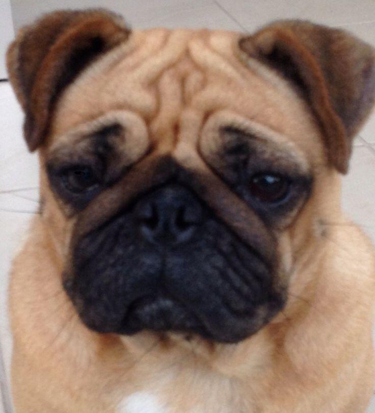 Megs is grumpy, again!