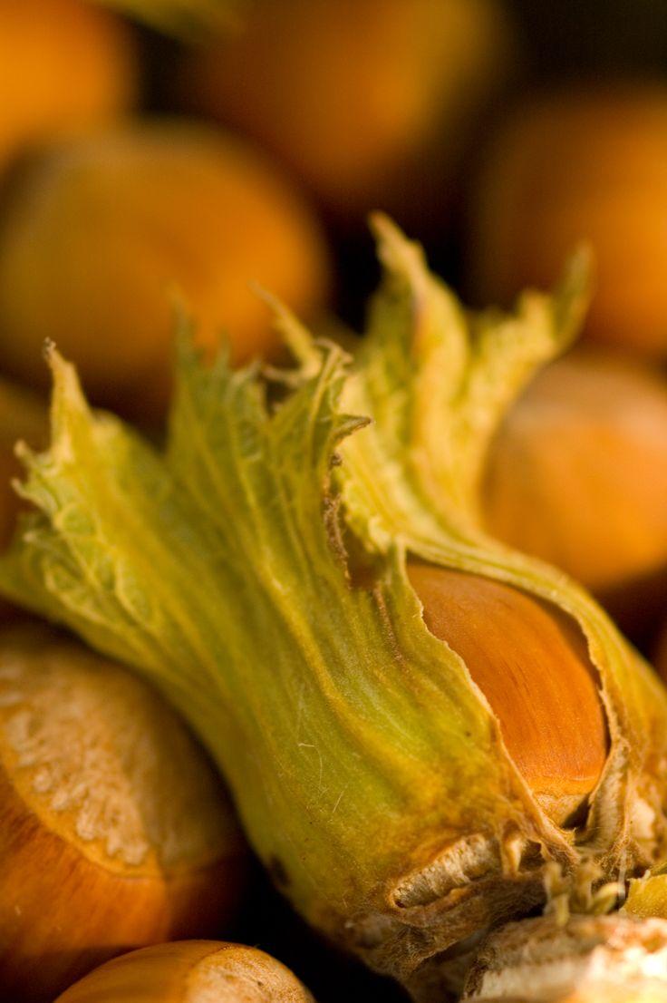 Fresh hazelnuts from Oregon