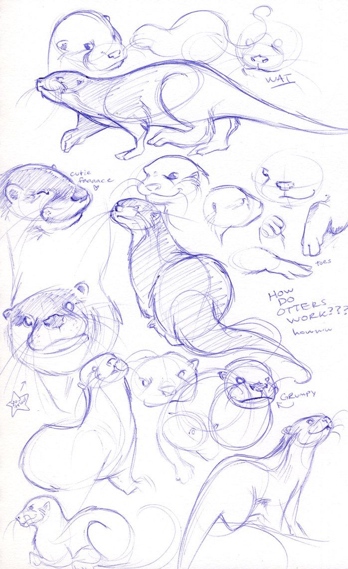 HOW DO OTTERS WORK???