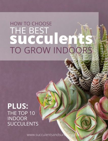 This free PDF is awesome! Learn how to choose succulents that grow well indoors, plus find out 10 succulents that are great for indoor succulent gardens!