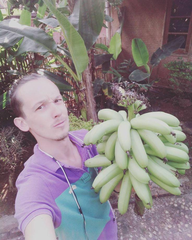 36 отметок «Нравится», 1 комментариев — Ronald Pal (@ronald_pal) в Instagram: «15 кг как с куста  #🍌 #перезагрузкатур #чиангмай #экотуризм»