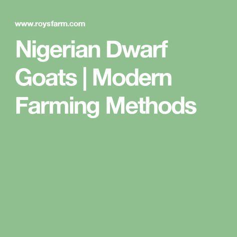 Nigerian Dwarf Goats | Modern Farming Methods