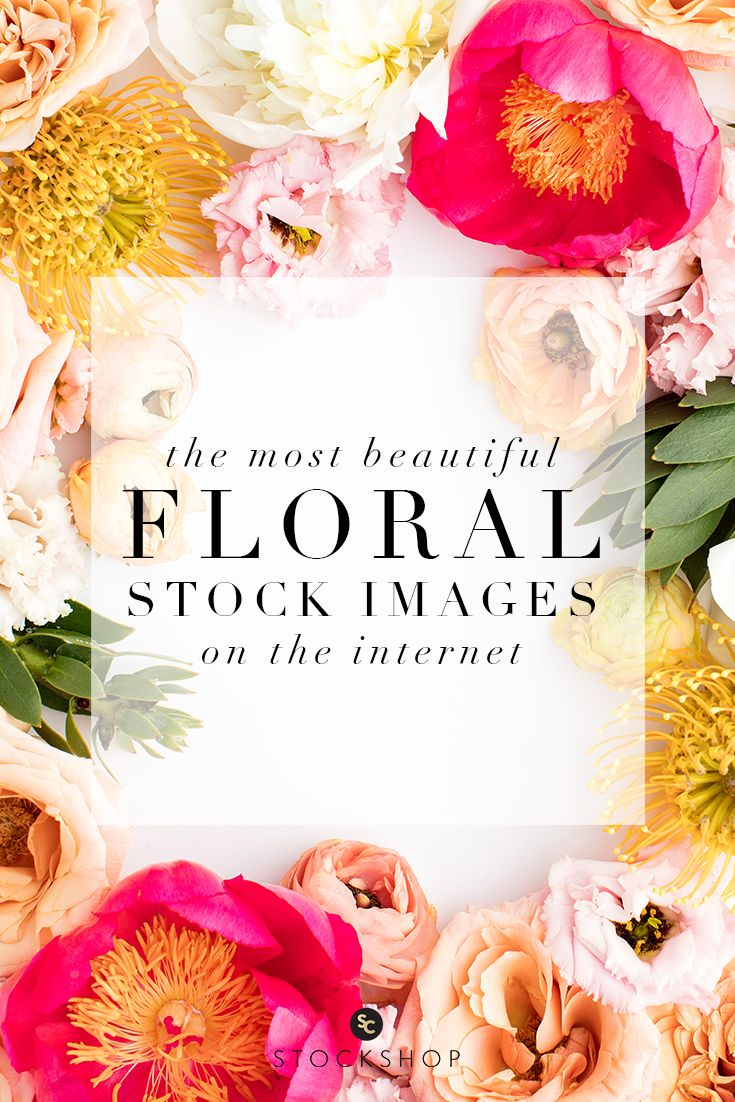 Photographystockphoto photographystockimages photographystock picture - Stunning Floral Styled Stock Photography For Creatives By The Sc Stockshop