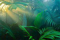 p1100m875558, Auf dem Land, Blatt, Garten, Natur, Palme, Tropischer Regenwald, Wetter