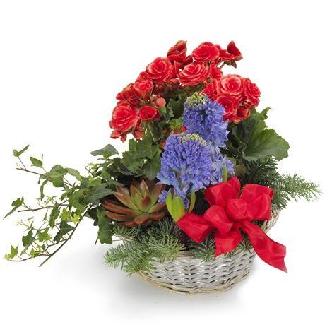Blandet julegruppe - Forus - Maren's Blomster