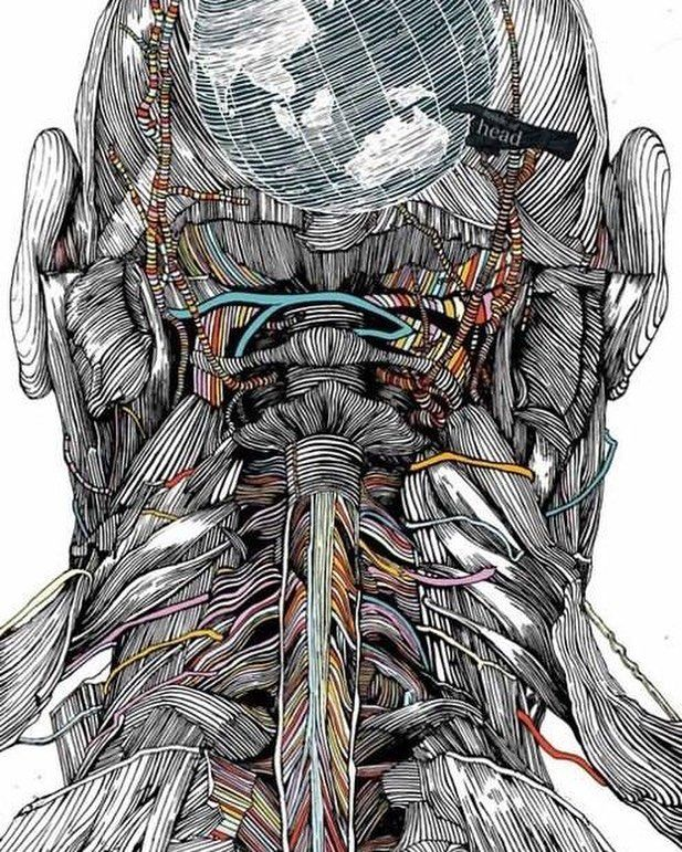 What Are Cervical Nerves? Via Anatomy In Motion  Cervical nerves are spinal…