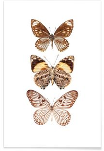 Butterfly 6 - Curious Collections by Marielle Leenders - Premium poster