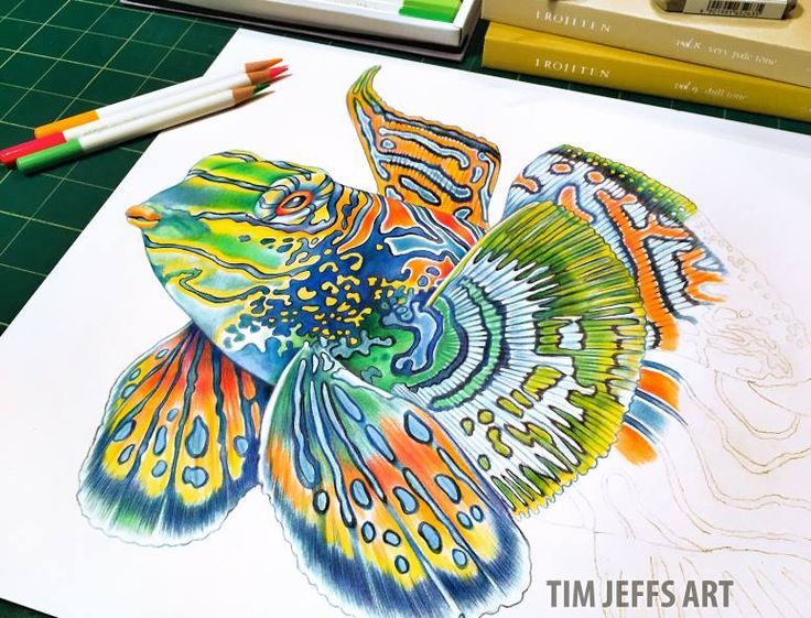 """Fin by """"Goby"""" Fin! 5 fins done...more to come!  This fish can swim and walk! They swim with a rapid pulsating of their fins which tends to make them look like they are hovering much like a humming bird, and the large pelvic fins are used for 'walking' on the seafloor.  Drawn with @TombowUSA Irojiten Colored Pencils, Dictionary Seascape Set."""
